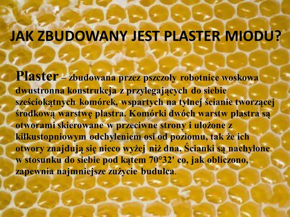 Plaster – zbudowana przez pszczoły robotnice woskowa dwustronna konstrukcja z przylegających do siebie sześciokątnych komórek, wspartych na tylnej ści