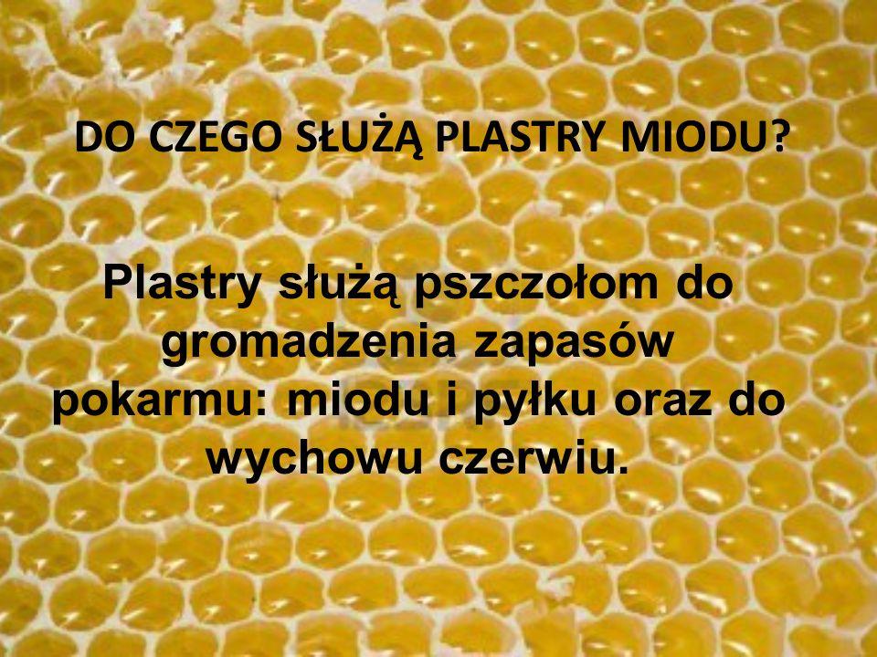 Plastry służą pszczołom do gromadzenia zapasów pokarmu: miodu i pyłku oraz do wychowu czerwiu. DO CZEGO SŁUŻĄ PLASTRY MIODU?