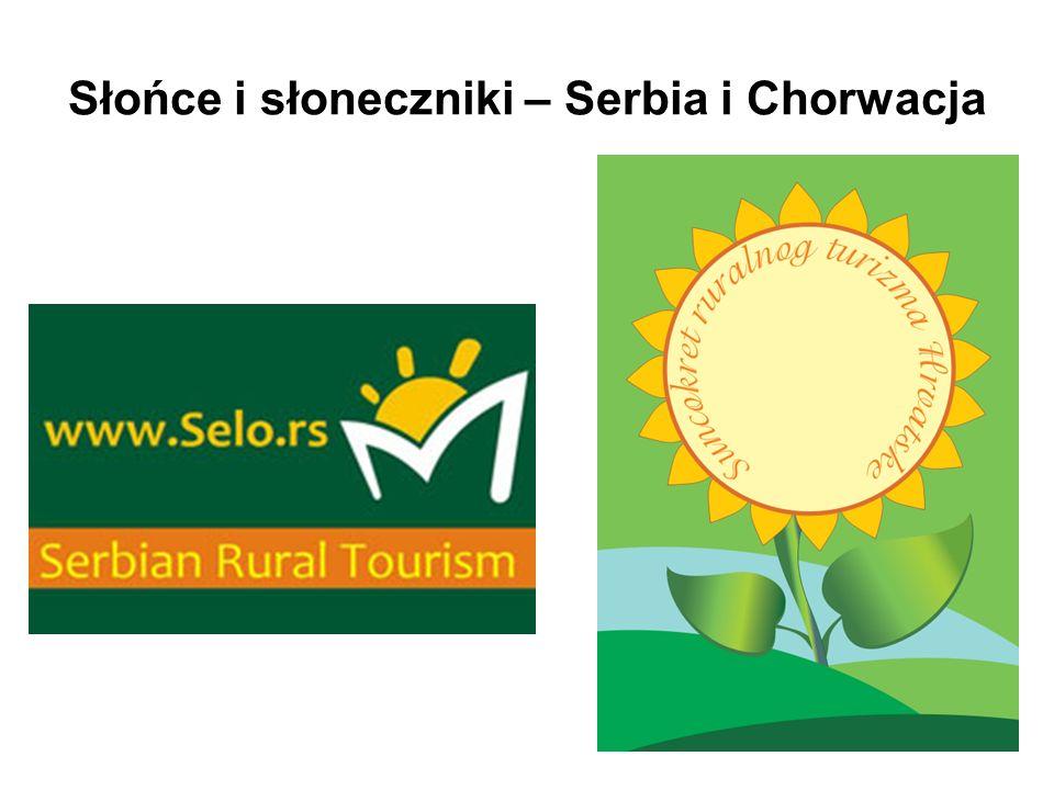 Słońce i słoneczniki – Serbia i Chorwacja