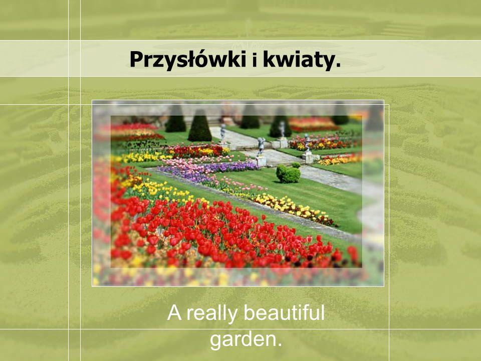 Przysłówki i kwiaty. A really beautiful garden.
