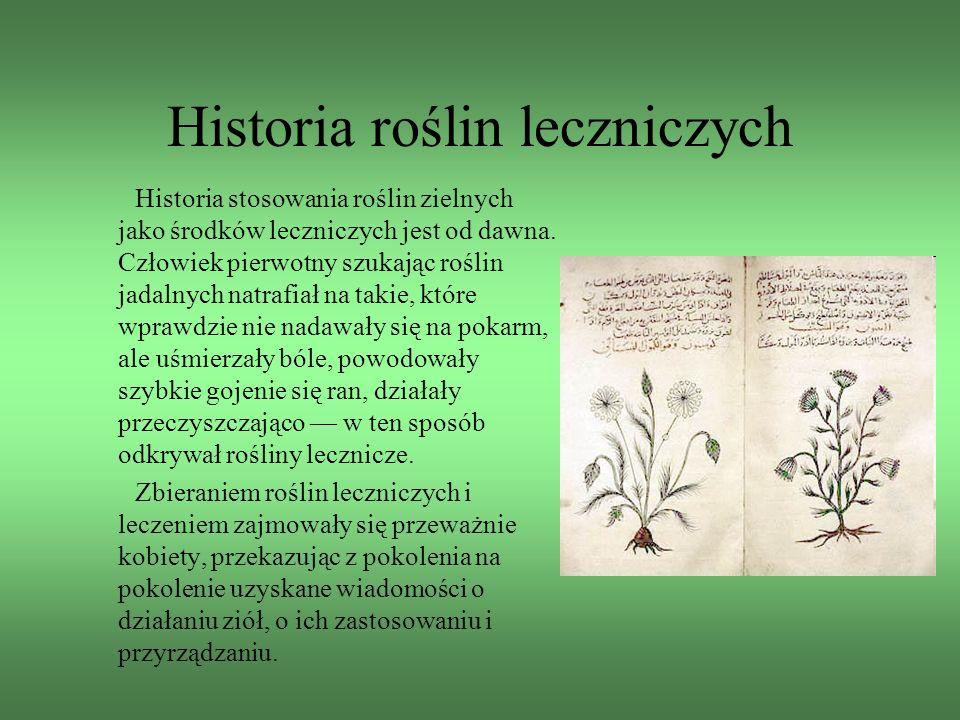 Historia roślin leczniczych Historia stosowania roślin zielnych jako środków leczniczych jest od dawna. Człowiek pierwotny szukając roślin jadalnych n