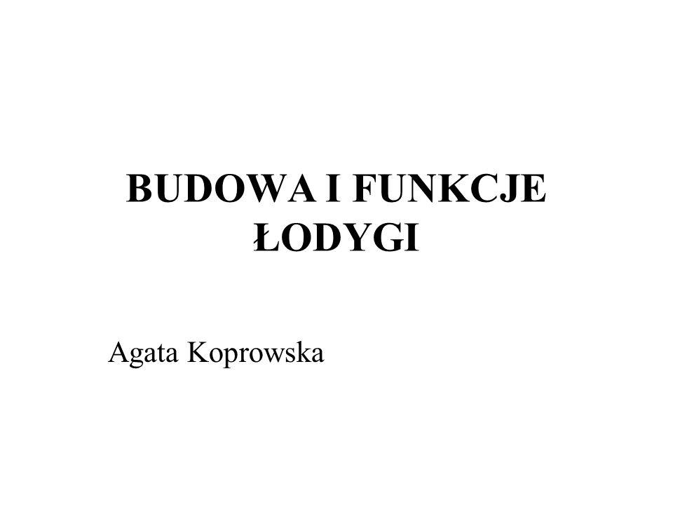 BUDOWA I FUNKCJE ŁODYGI Agata Koprowska