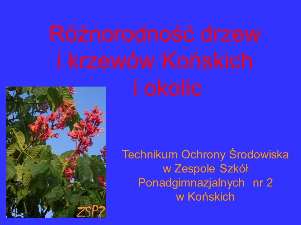 Technikum Ochrony Środowiska w Zespole Szkół Ponadgimnazjalnych nr 2 w Końskich Różnorodność drzew i krzewów Końskich i okolic