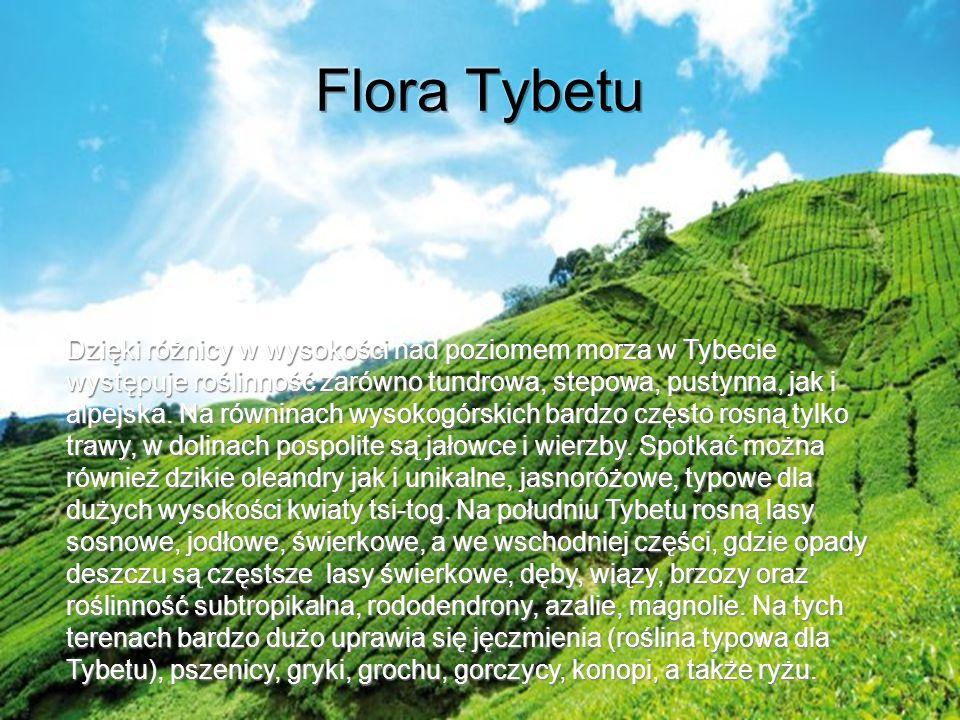 Dzięki różnicy w wysokości nad poziomem morza w Tybecie występuje roślinność zarówno tundrowa, stepowa, pustynna, jak i alpejska. Na równinach wysokog