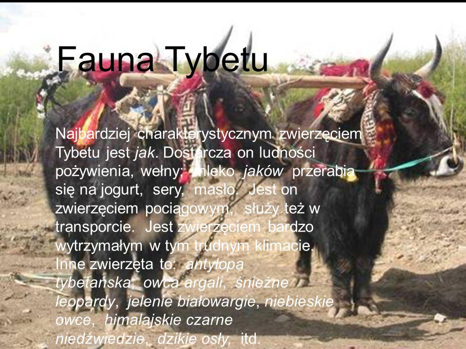 Fauna Tybetu Najbardziej charakterystycznym zwierzęciem Tybetu jest jak. Dostarcza on ludności pożywienia, wełny; mleko jaków przerabia się na jogurt,