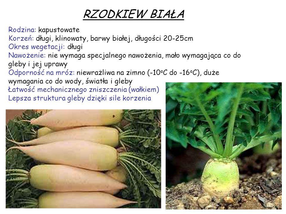 NYGER Roślina subtropikalna Dobry system korzeniowy Krótki cykl wzrostu (3 miesiące) – 1-1,5m Odporność na mróz: odporna na suszę i wysokie temperatury.