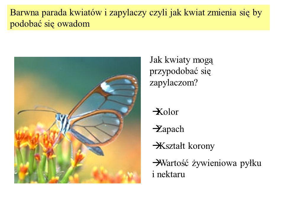 Kolor Zapach Kształt korony Wartość żywieniowa pyłku i nektaru Barwna parada kwiatów i zapylaczy czyli jak kwiat zmienia się by podobać się owadom Jak