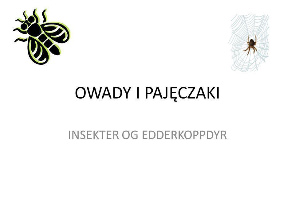 OWADY - INSEKTER Owady, inaczej zwane insektami, to najliczniejsza grupa zwierząt.