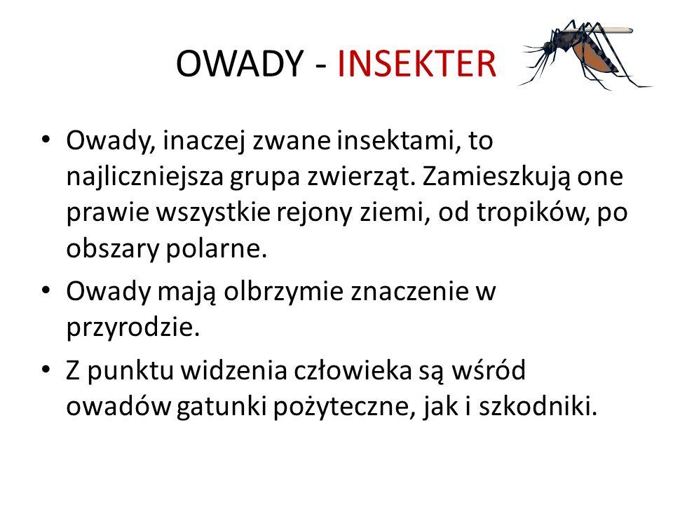 OWADY - INSEKTER Owady, inaczej zwane insektami, to najliczniejsza grupa zwierząt. Zamieszkują one prawie wszystkie rejony ziemi, od tropików, po obsz