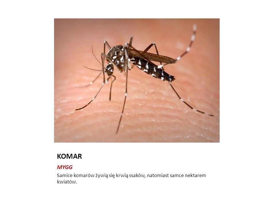 KOMAR MYGG Samice komarów żywią się krwią ssaków, natomiast samce nektarem kwiatów.