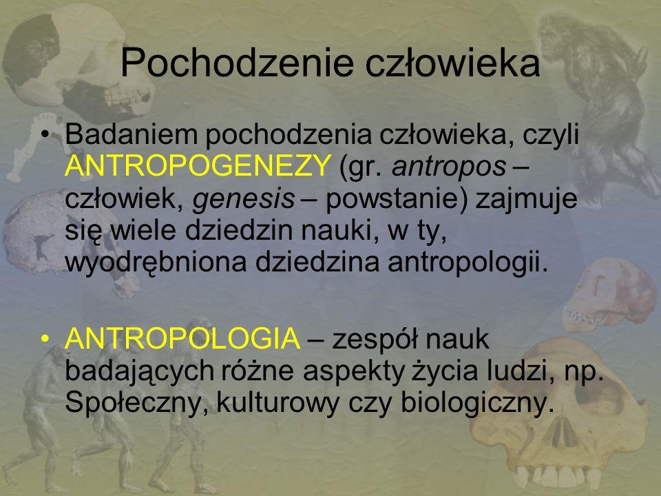 Pochodzenie człowieka Badaniem pochodzenia człowieka, czyli ANTROPOGENEZY (gr. antropos – człowiek, genesis – powstanie) zajmuje się wiele dziedzin na