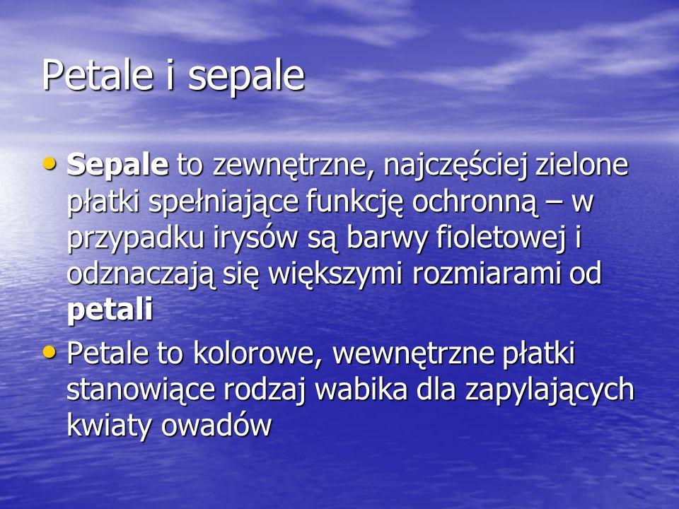 Petale i sepale Sepale to zewnętrzne, najczęściej zielone płatki spełniające funkcję ochronną – w przypadku irysów są barwy fioletowej i odznaczają si