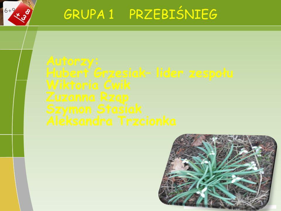 GRUPA 4 SASANKA Nazwa kwiatu Sasanka Wysokość Sasanka ma wysokość 20-30 cm i szerokość 20 cm.