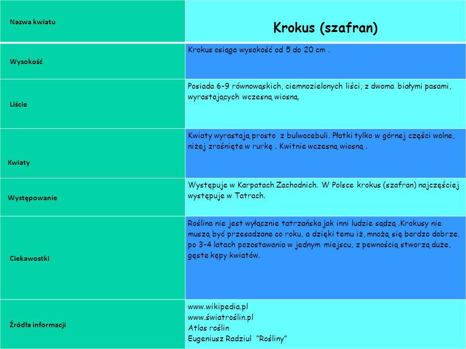 GRUPA 2 KROKUS Nazwa kwiatu Krokus (szafran) Wysokość Krokus osiąga wysokość od 5 do 20 cm.