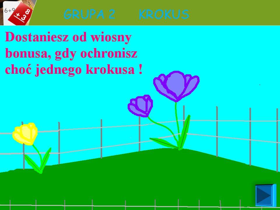GRUPA 2 KROKUS Nazwa kwiatu Krokus (szafran) Wysokość Krokus osiąga wysokość od 5 do 20 cm. Liście Posiada 6-9 równowąskich, ciemnozielonych liści, z