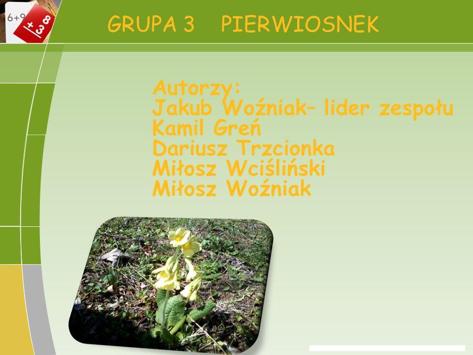 GRUPA 3 PIERWIOSNEK Autorzy: Jakub Woźniak– lider zespołu Kamil Greń Dariusz Trzcionka Miłosz Wciśliński Miłosz Woźniak