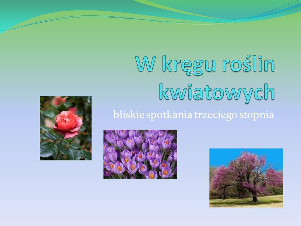 Symetria grzbiecista Kwiat grzbiecisty – kwiat posiadający taką budowę i układ poszczególnych części okwiatu, że ma tylko jedną oś symetrii.