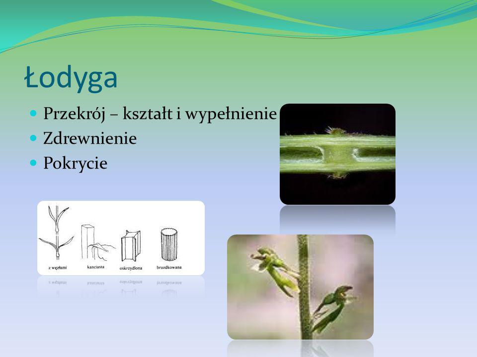 Dowiedzieliśmy się jak oznaczać przynależność systematyczną roślin? Fotografie Rysunki Klucze