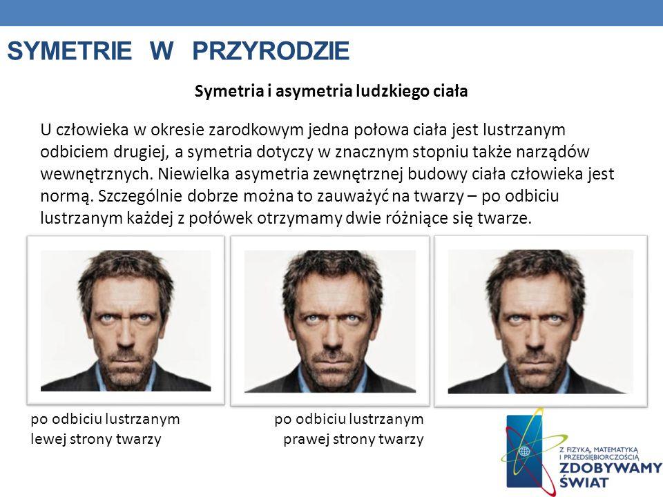 SYMETRIE W PRZYRODZIE Symetria i asymetria ludzkiego ciała U człowieka w okresie zarodkowym jedna połowa ciała jest lustrzanym odbiciem drugiej, a sym