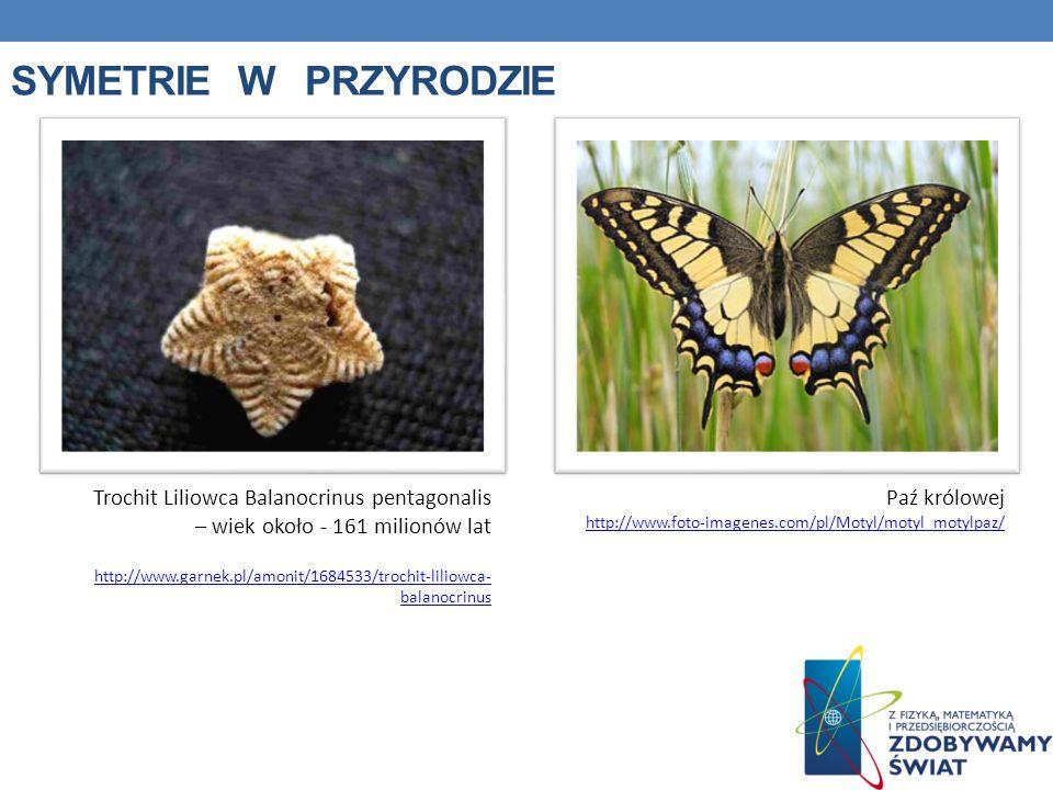 SYMETRIE W PRZYRODZIE Trochit Liliowca Balanocrinus pentagonalis – wiek około - 161 milionów lat http://www.garnek.pl/amonit/1684533/trochit-liliowca-