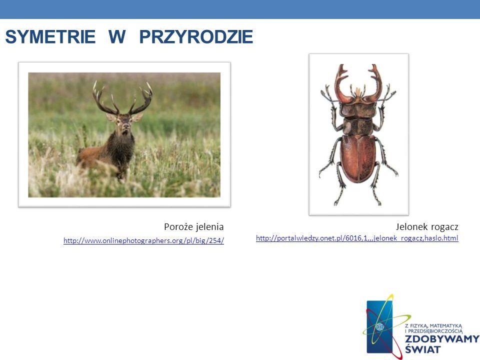 SYMETRIE W PRZYRODZIE Poroże jelenia http://www.onlinephotographers.org/pl/big/254/ http://www.onlinephotographers.org/pl/big/254/ Jelonek rogacz http