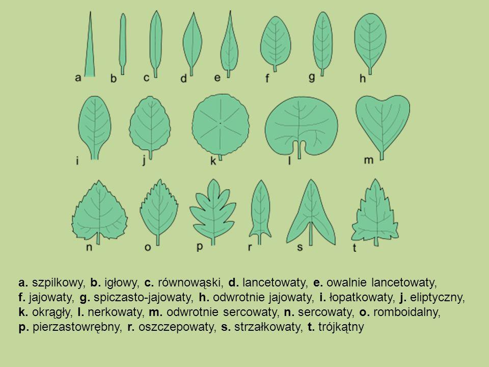 a. szpilkowy, b. igłowy, c. równowąski, d. lancetowaty, e. owalnie lancetowaty, f. jajowaty, g. spiczasto-jajowaty, h. odwrotnie jajowaty, i. łopatkow