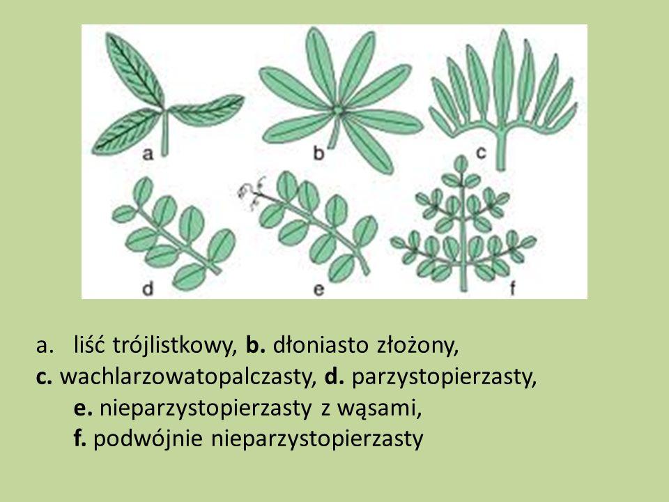 a.liść trójlistkowy, b. dłoniasto złożony, c. wachlarzowatopalczasty, d. parzystopierzasty, e. nieparzystopierzasty z wąsami, f. podwójnie nieparzysto