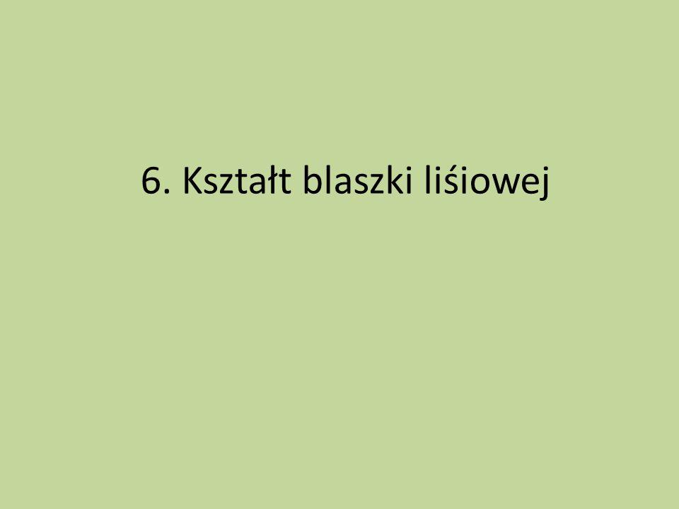 6. Kształt blaszki liśiowej