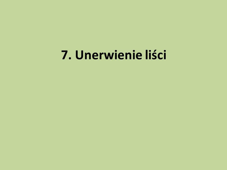 7. Unerwienie liści