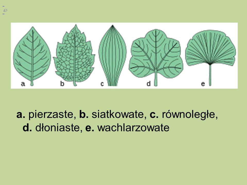 a. pierzaste, b. siatkowate, c. równoległe, d. dłoniaste, e. wachlarzowate
