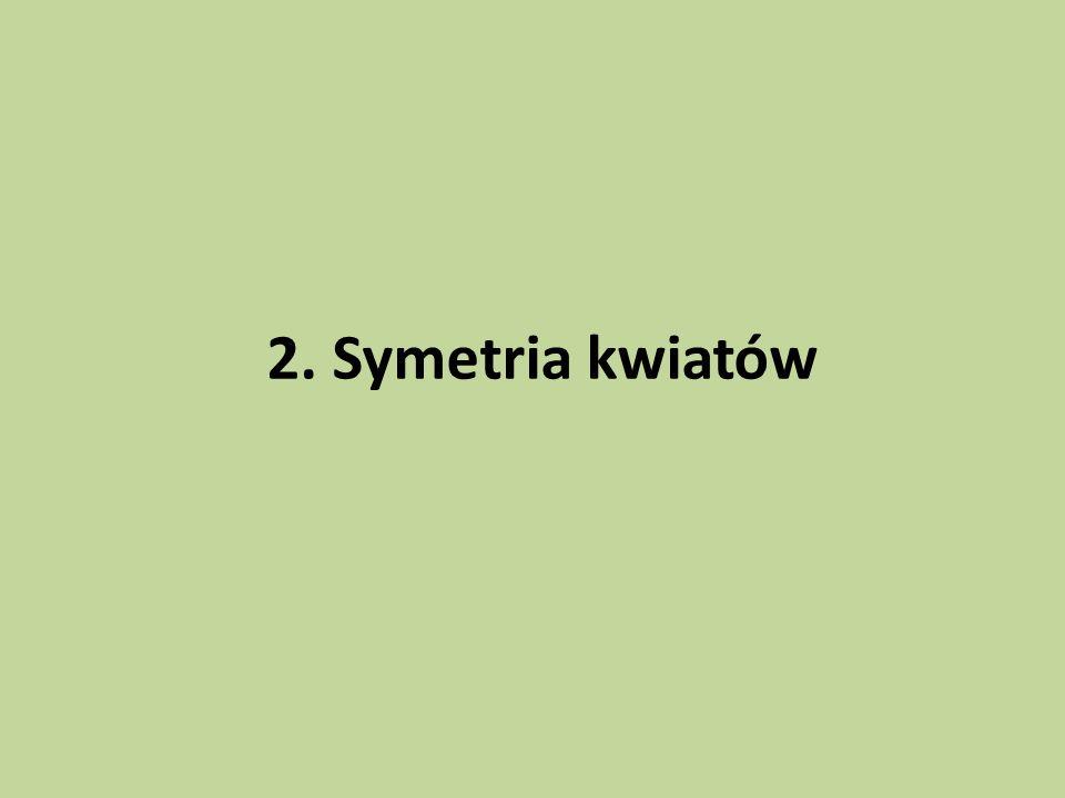 2. Symetria kwiatów