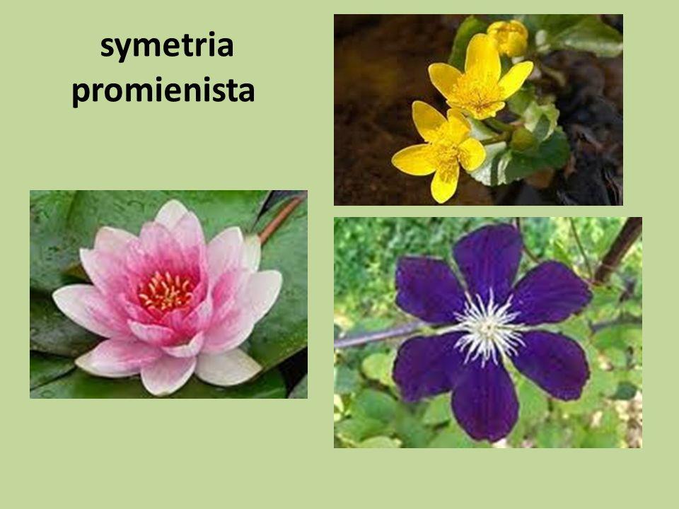 4. Rodzaje liści