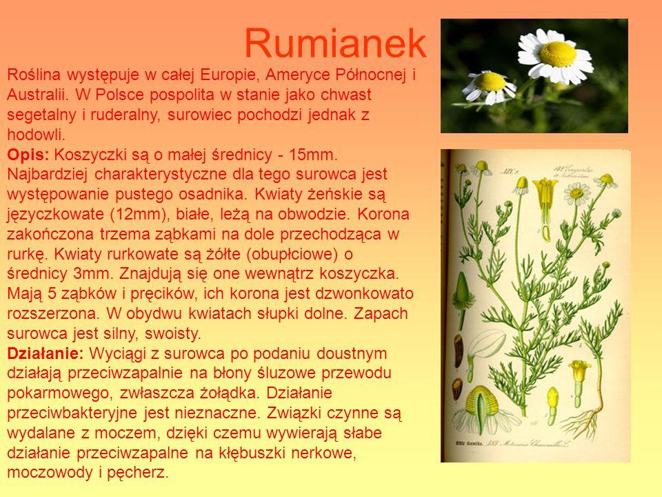 Rumianek Roślina występuje w całej Europie, Ameryce Północnej i Australii. W Polsce pospolita w stanie jako chwast segetalny i ruderalny, surowiec poc