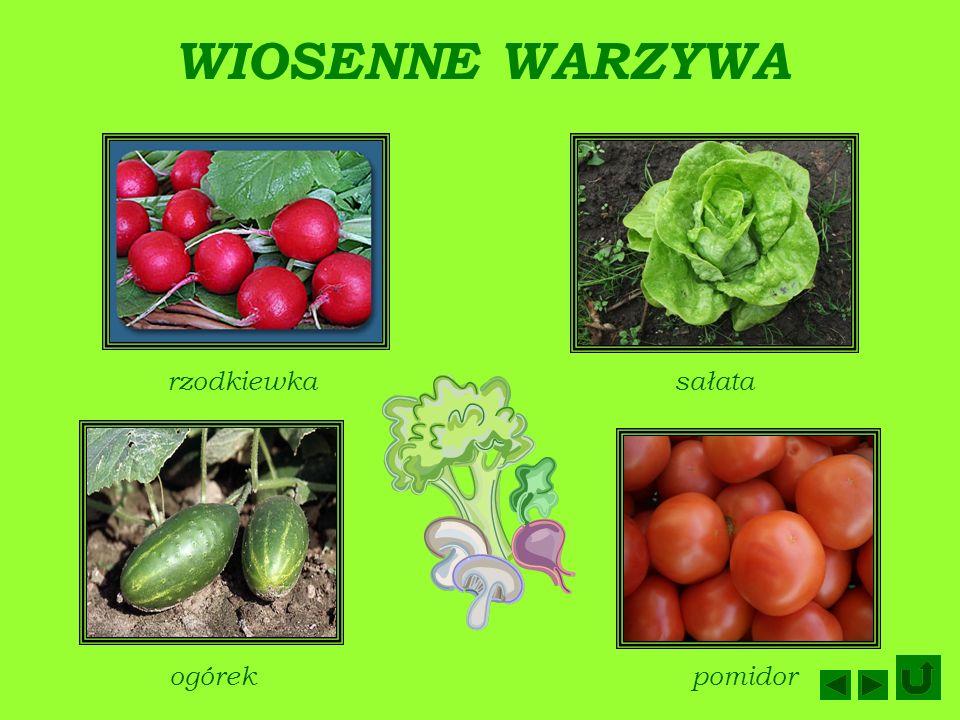 WIOSENNE WARZYWA rzodkiewkasałata ogórekpomidor