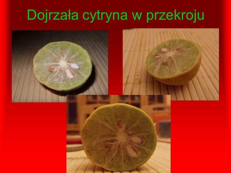 Dojrzała cytryna w przekroju