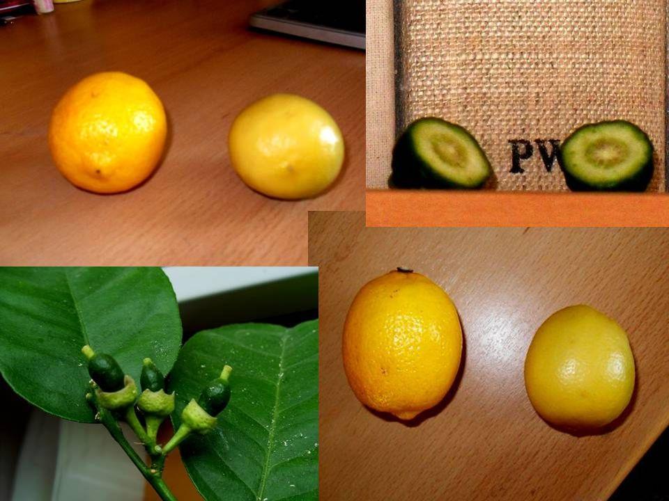 Różne etapy rozwoju owocu