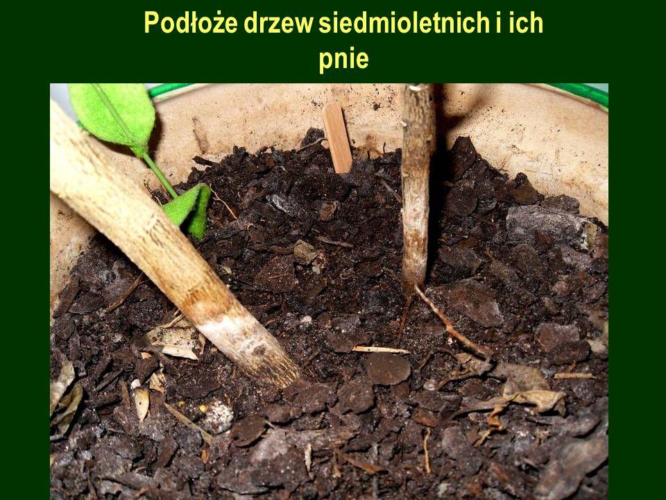 Powierzchnia liścia i skórka owocu w ujęciu makro: