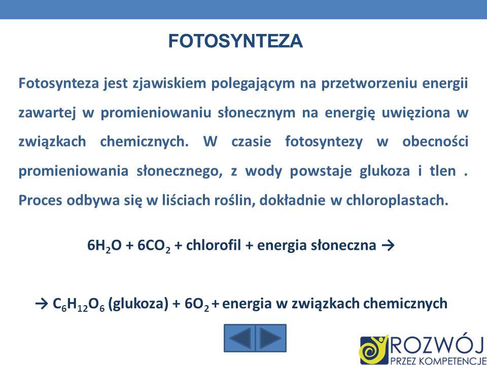 FOTOSYNTEZA Fotosynteza jest zjawiskiem polegającym na przetworzeniu energii zawartej w promieniowaniu słonecznym na energię uwięziona w związkach che