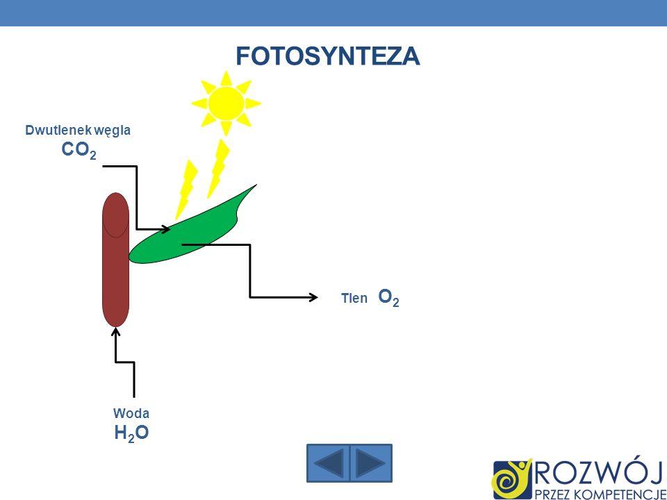 Dwutlenek węgla CO 2 Woda H 2 O Tlen O 2 FOTOSYNTEZA