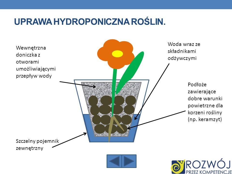 UPRAWA HYDROPONICZNA ROŚLIN. Woda wraz ze składnikami odżywczymi Podłoże zawierające dobre warunki powietrzne dla korzeni rośliny (np. keramzyt) Wewnę