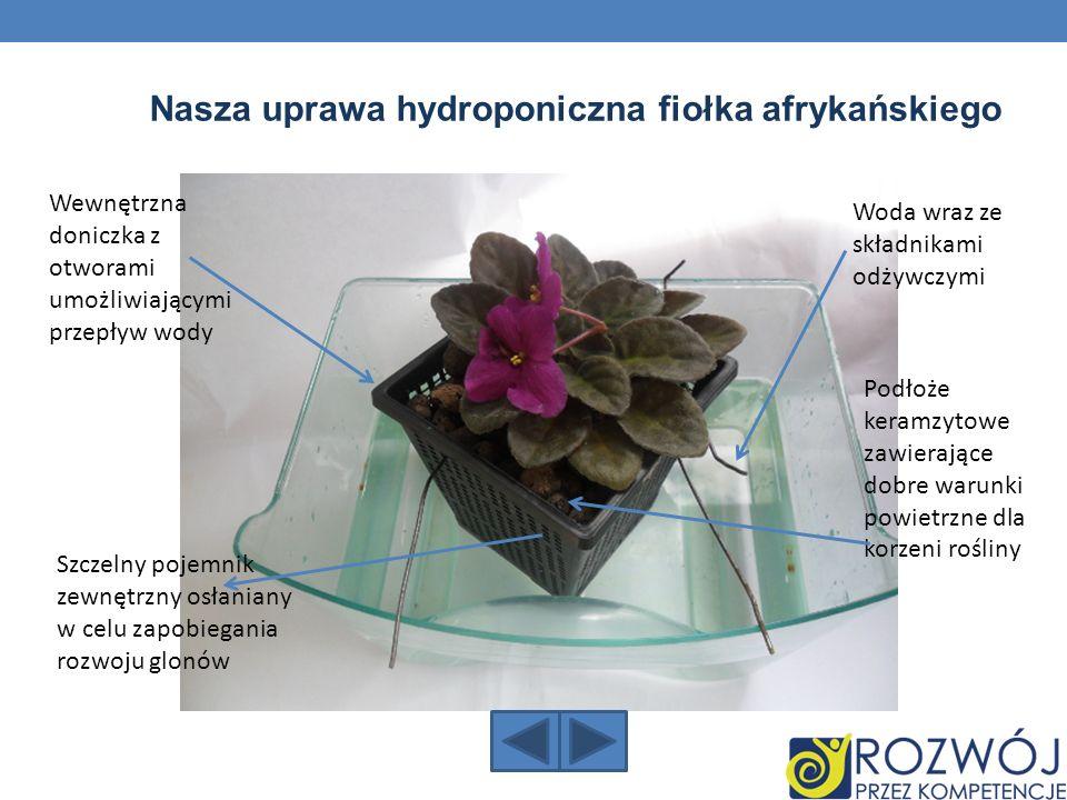 Nasza uprawa hydroponiczna fiołka afrykańskiego Wewnętrzna doniczka z otworami umożliwiającymi przepływ wody Woda wraz ze składnikami odżywczymi Podło