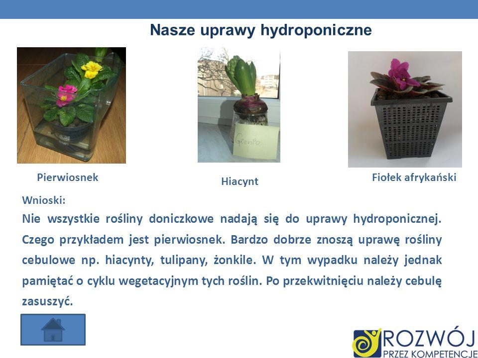 Nasze uprawy hydroponiczne Pierwiosnek Hiacynt Fiołek afrykański Wnioski: Nie wszystkie rośliny doniczkowe nadają się do uprawy hydroponicznej. Czego