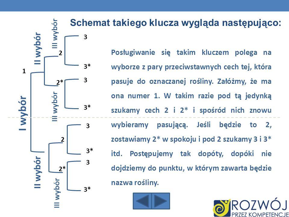 Schemat takiego klucza wygląda następująco: I wybór II wybór III wybór Posługiwanie się takim kluczem polega na wyborze z pary przeciwstawnych cech te