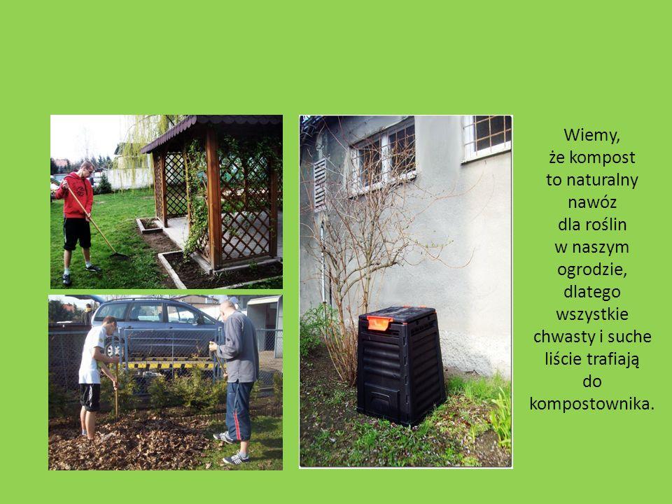 Wiemy, że kompost to naturalny nawóz dla roślin w naszym ogrodzie, dlatego wszystkie chwasty i suche liście trafiają do kompostownika.