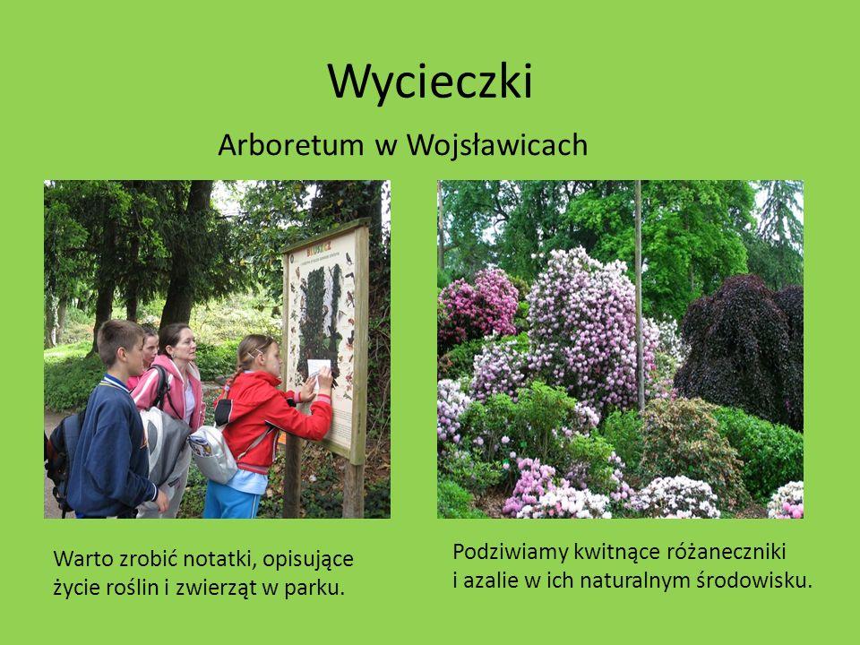 Wycieczki Arboretum w Wojsławicach Warto zrobić notatki, opisujące życie roślin i zwierząt w parku. Podziwiamy kwitnące różaneczniki i azalie w ich na
