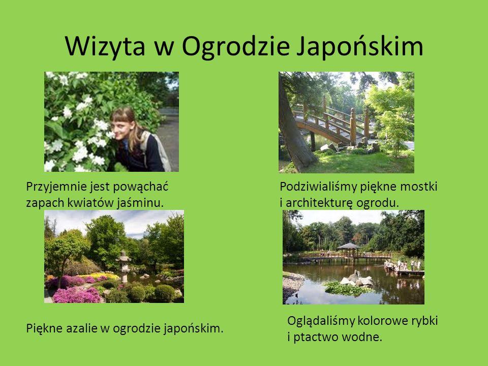 Wizyta w Ogrodzie Japońskim Przyjemnie jest powąchać zapach kwiatów jaśminu. Podziwialiśmy piękne mostki i architekturę ogrodu. Oglądaliśmy kolorowe r