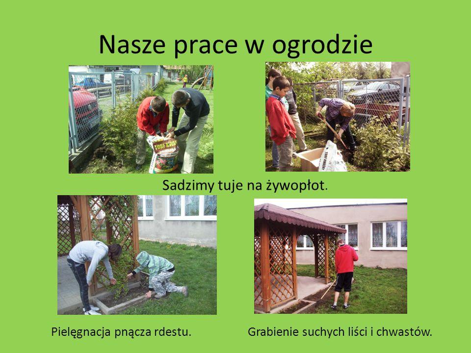 Nasze prace w ogrodzie Sadzimy tuje na żywopłot. Pielęgnacja pnącza rdestu.Grabienie suchych liści i chwastów.