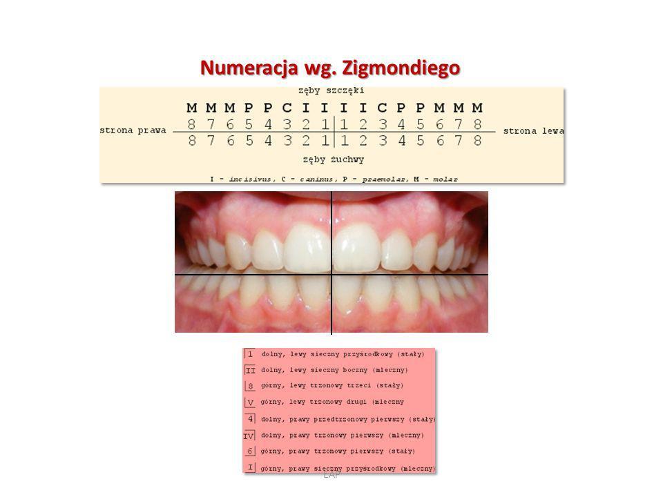 Numeracja wg. Zigmondiego EAP
