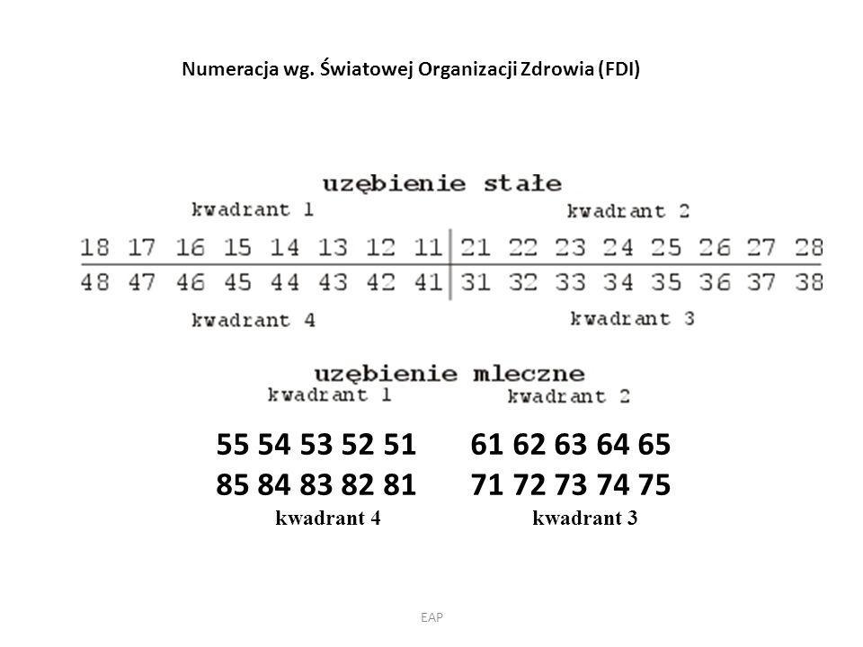 Numeracja wg.