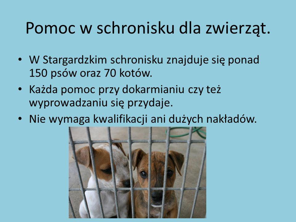 Pomoc w schronisku dla zwierząt. W Stargardzkim schronisku znajduje się ponad 150 psów oraz 70 kotów. Każda pomoc przy dokarmianiu czy też wyprowadzan